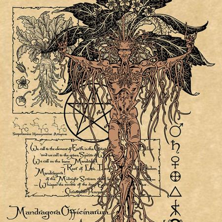 MANDRAKE Art print on Parchment from Maxine Miller's Magical Botanicals Plant Series. ©celticjackalope.com